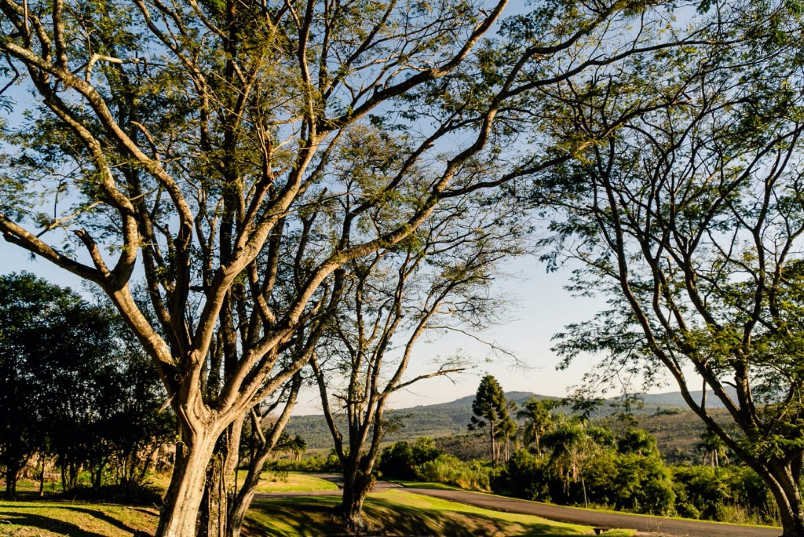 Árvore bonita no Paraná