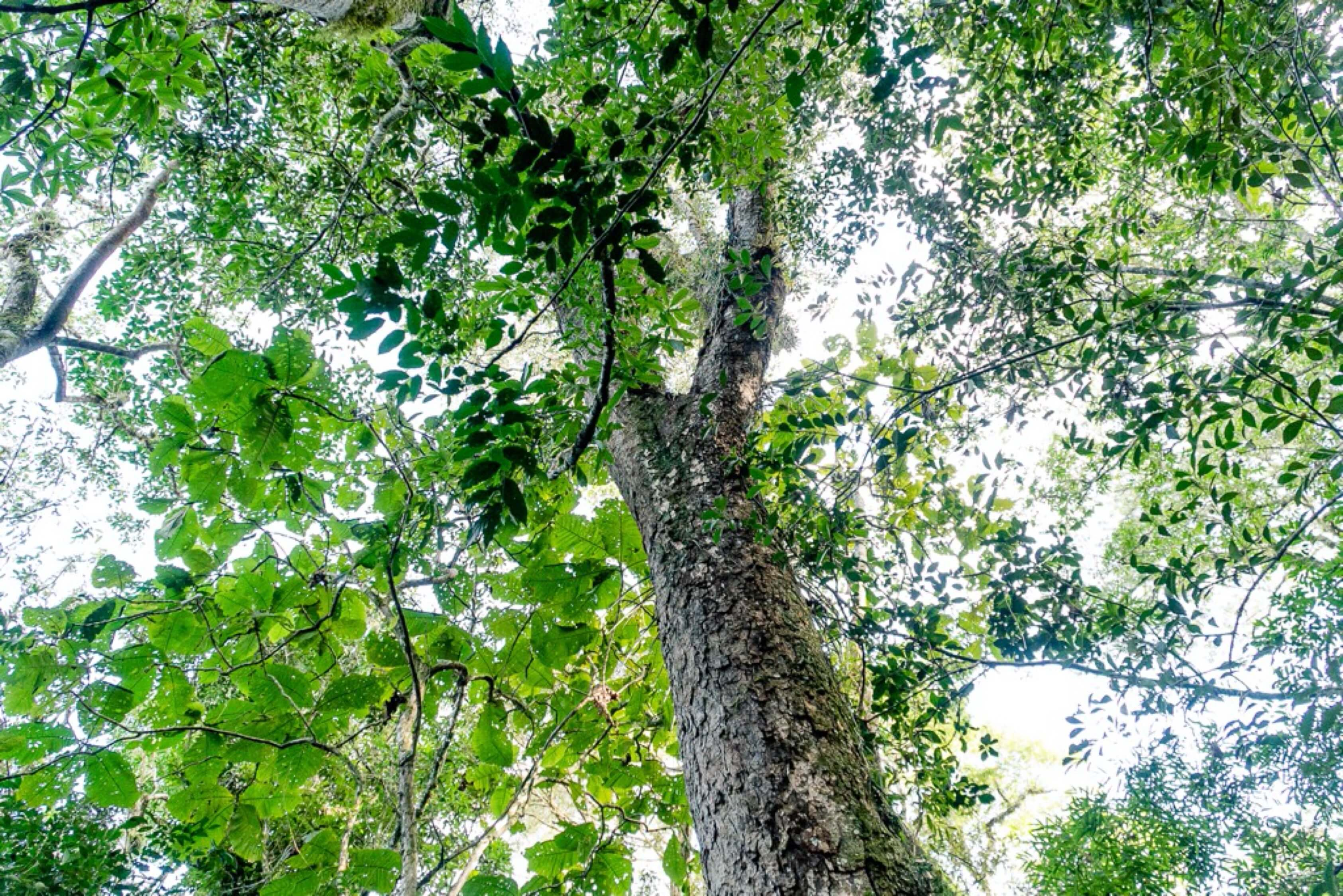 Natureza perto de Curitiba
